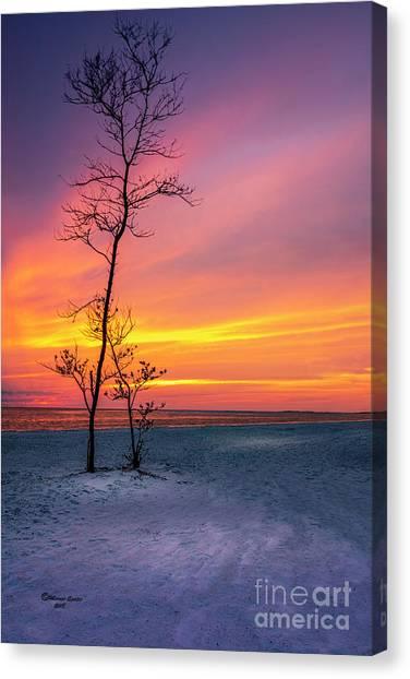 Treeline Canvas Print - Sunset Light by Marvin Spates
