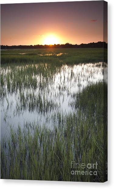 Marsh Grass Canvas Print - Sunset Marsh Grass by Dustin K Ryan