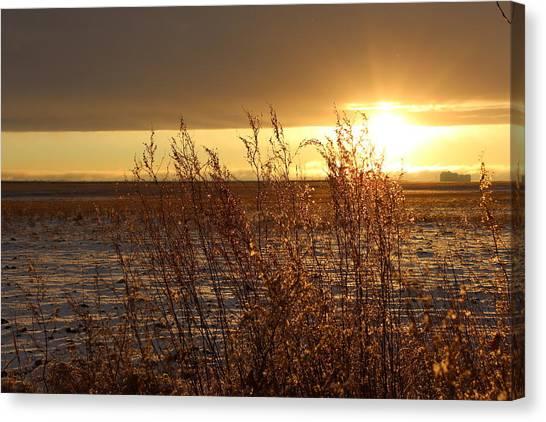 Sunset On Field Canvas Print