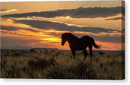 Sunset On The Mustang Canvas Print