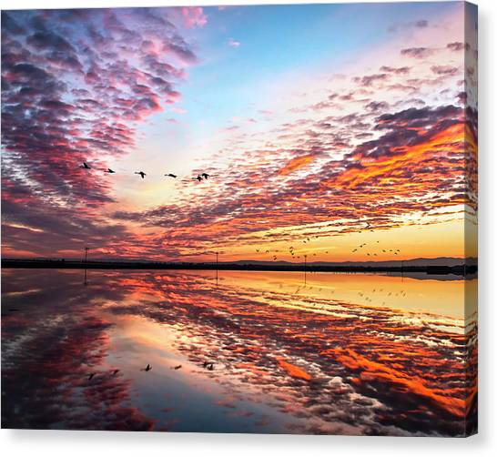 Sunset On The Pacific Flyway Canvas Print