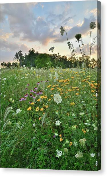 Prairie Sunrises Canvas Print - Sunset Over Boone Creek Conservation Area Garden  by Ray Mathis