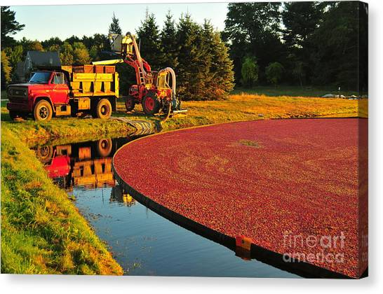 Cranberry Sauce Canvas Print - Sunset Over Cranberry Bog by Catherine Reusch Daley