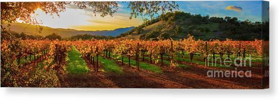 Sonoma Valley Canvas Print - Sunset Over Gamble Vineyards by Jon Neidert
