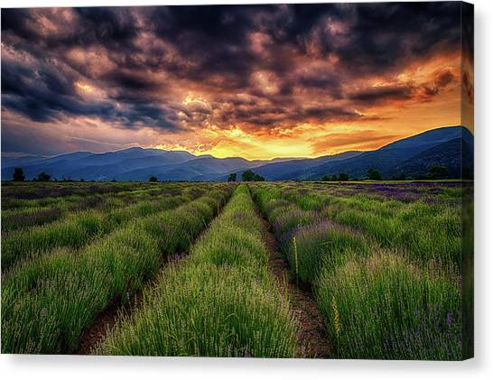 Sunset Over Lavender Field  Canvas Print