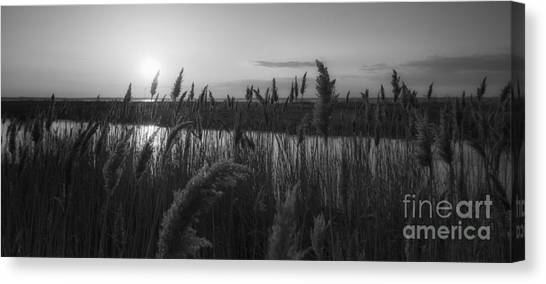 Marsh Grass Canvas Print - Sunset Over The Marsh Bw by Michael Ver Sprill