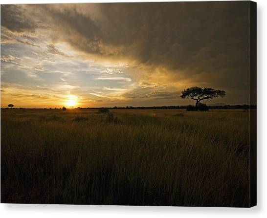 sunset over the Serengeti plains Canvas Print