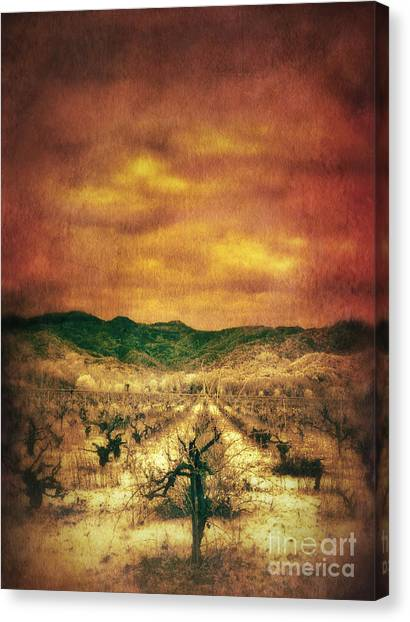 Vineyard In Napa Canvas Print - Sunset Over Vineyard by Jill Battaglia