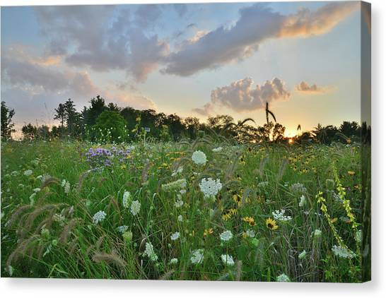Prairie Sunrises Canvas Print - Sunset Over Wildflowers In Boone Creek Conservation Area by Ray Mathis