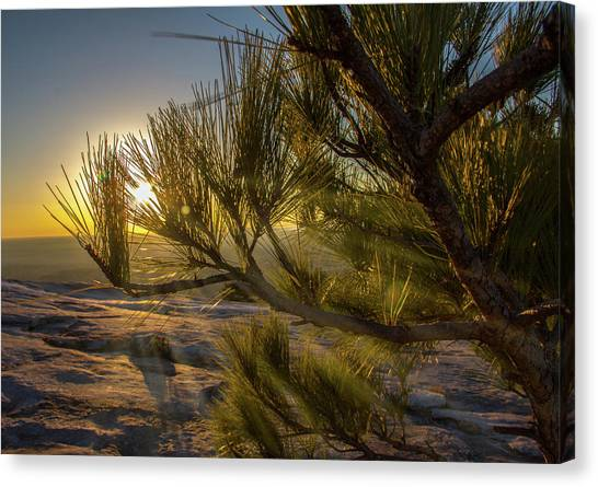 Sunset Pines Canvas Print