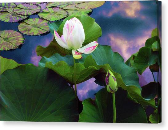 Sunset Pond Lotus Canvas Print