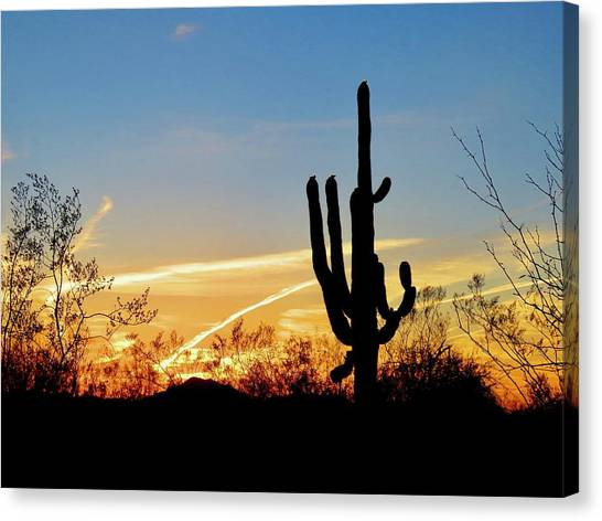 Sunset Saguaro In The Spring Canvas Print