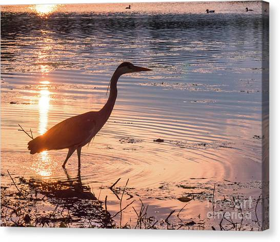 Sunset Sentinel Canvas Print by Paul Farnfield