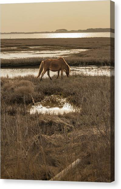 Maryland Horses Canvas Print - Sunset Stroll by Kristopher Schoenleber
