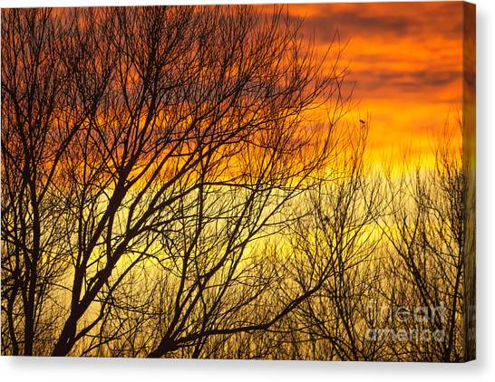 Sunset Through The Trees Canvas Print