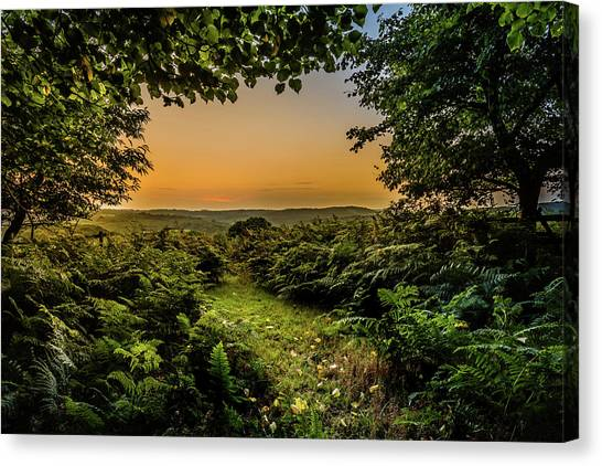 Canvas Print featuring the photograph Sunset Through Trees by Nick Bywater