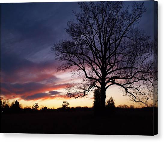 Sunset Tree Canvas Print by Michael Edwards