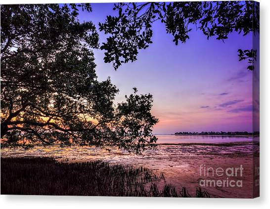 Mangrove Trees Canvas Print - Sunset Under The Mangroves by Marvin Spates