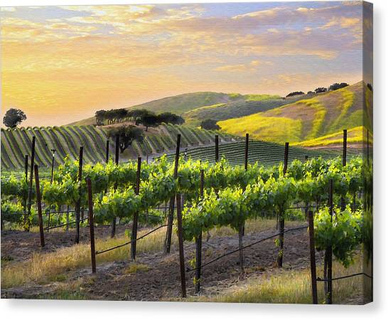 Vineyards Canvas Print - Sunset Vineyard by Sharon Foster
