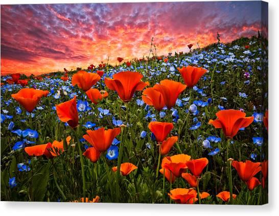 Poppys Canvas Print - Sunset Wildflowers by Debra and Dave Vanderlaan