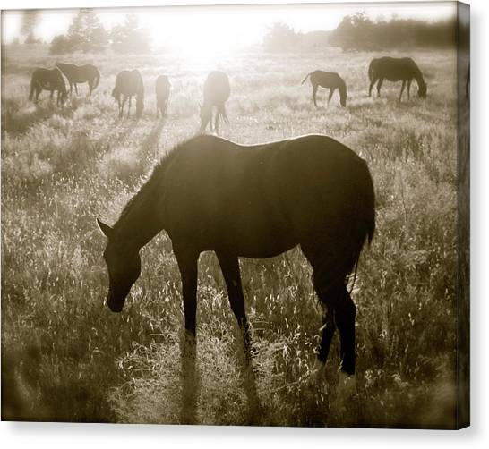 Sunset With Band Of Horses Canvas Print