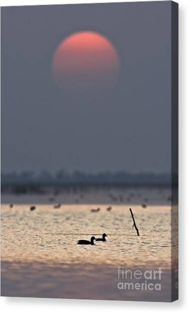 Sunset With Coots Canvas Print