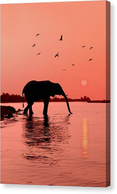 Rivers Canvas Print - Sunset With Elephant by Christian Heeb