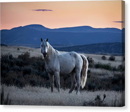 Sunset With Wild Stallion Tripod In Sand Wash Basin Canvas Print