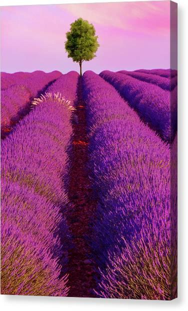 Sunsets Are Purple Canvas Print