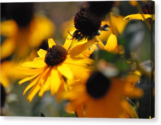 Sunshine And Daisies Canvas Print by Trudi Southerland