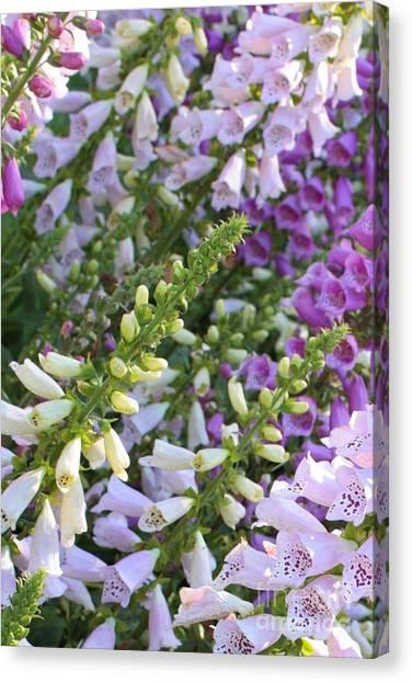 Foxglove Flowers Canvas Print - Sunshine On Foxgloves by Carol Groenen