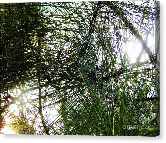 Sunshine Through Pine Needles Canvas Print