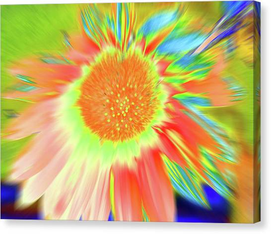 Sunswoop Canvas Print
