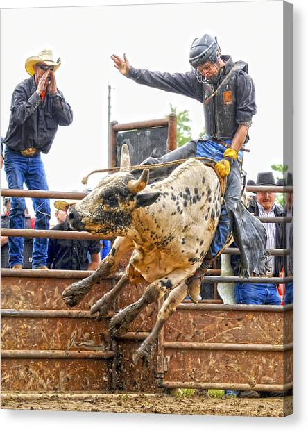 Bull Riding Canvas Print - Support From The Sidelines by Ron  McGinnis