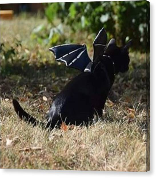 Steampunk Canvas Print - Supposedly The #jerseydevil Was Spotted by Sirius Black Adventure Cat