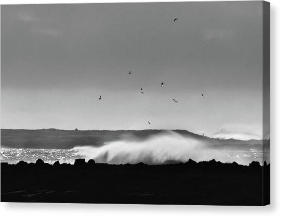 Surf Birds Canvas Print