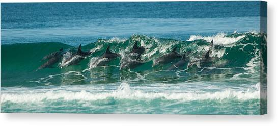 Surfing Dolphins 4 Canvas Print