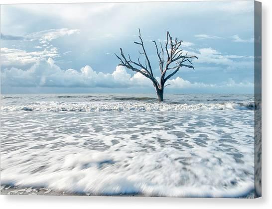 Surfside Tree Canvas Print