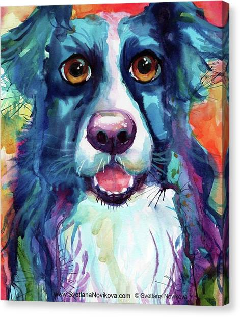 Colorful Canvas Print - Surprised Border Collie Watercolor by Svetlana Novikova