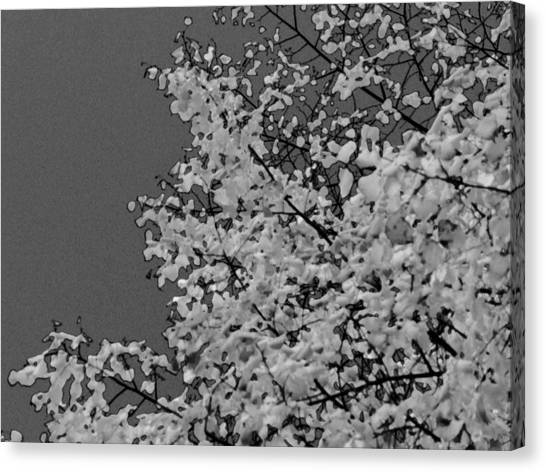 Surreal Deconstruction Of Fall Foliage In Noir Canvas Print