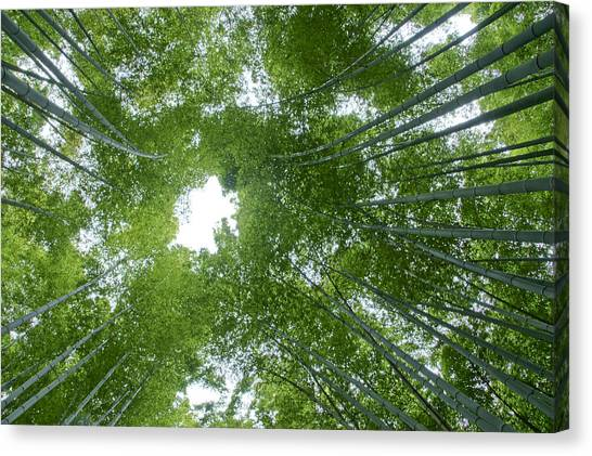 Sagano Bamboo Forest Canvas Print - Surrounded By Bamboo by Brian Kamprath