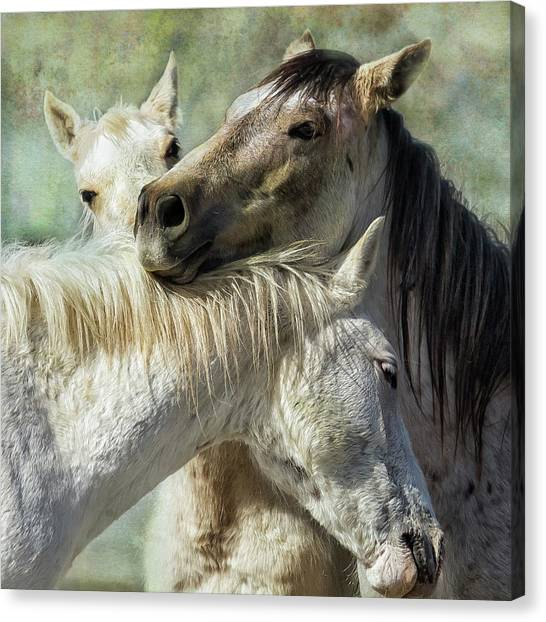 Canvas Print featuring the photograph Surrounded By Love by Belinda Greb