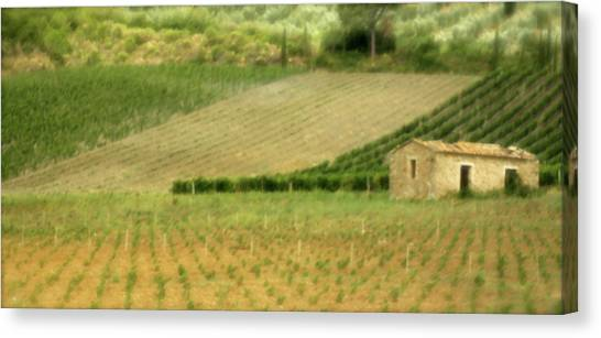 Surrounded By Vineyards Canvas Print