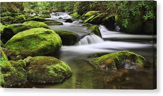 Surrounded In Green Canvas Print