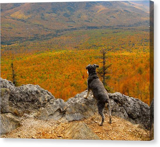 Surveying Autumn Canvas Print