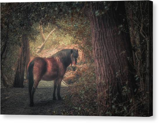 Birmingham Canvas Print - Sutton Pony by Chris Fletcher