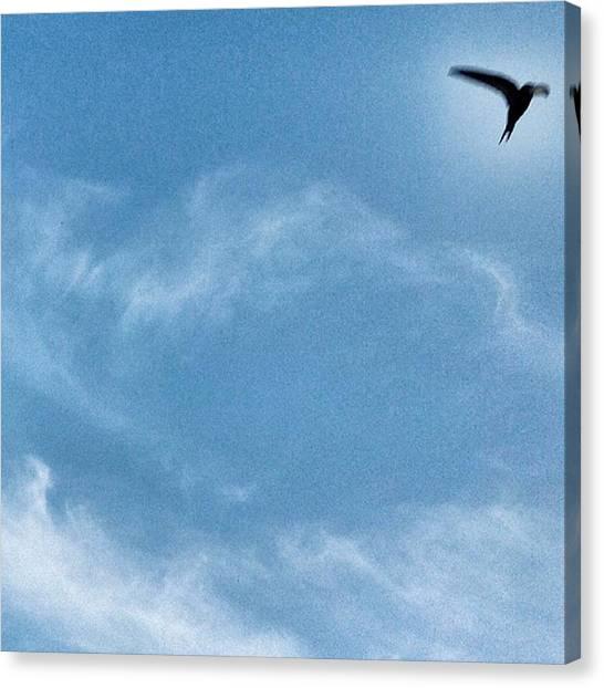Swallows Canvas Print - #swallow #bird #birdwatching by Michele Stuppiello