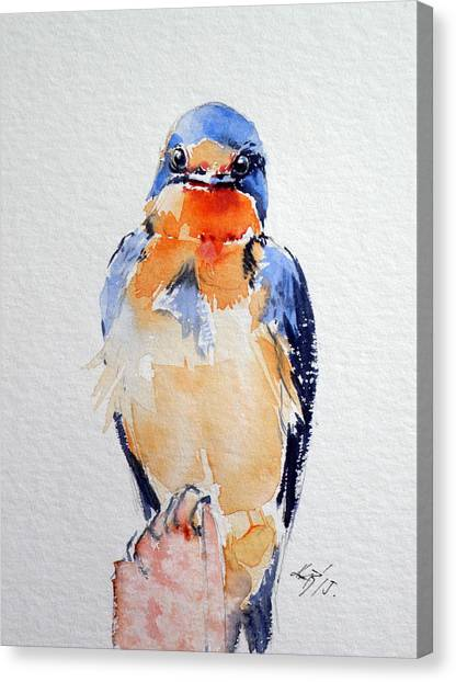 Swallow Canvas Print - Swallow by Kovacs Anna Brigitta