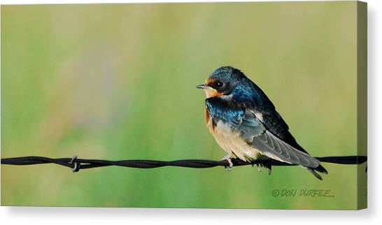 Canvas Print - Swallow On Barbed Wire by Don Durfee