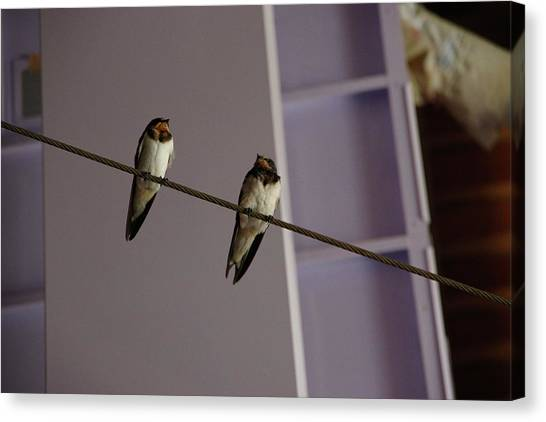 Swallows Canvas Print - Swallows by N Abe